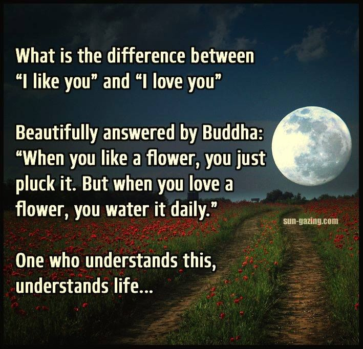 Difference-Between-Like-And-Love